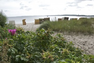 Vordergrund: Heckenrosen, Hintergrund: Strandkörbe, Sand und Meer