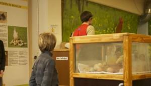 Brutapparat, Schlüpfkasten, Teile der Ausstellung