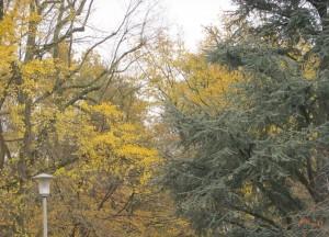 Stadtpark_Nov3