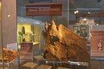Dino_Ausstellung