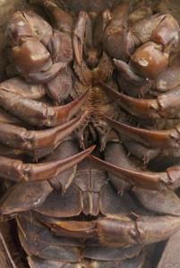 Teilansicht eines Tieres mit Gliederfüßler-Beine