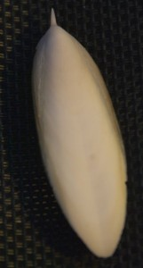 Sepia-Schulp